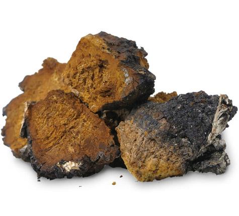 detria-chaga-mushroom-super-herbs