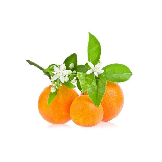 Appelsiininkukkauute 3